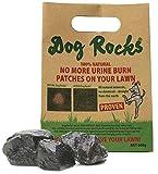 Dog Rocks Preventer di Urina per Cani, 600g